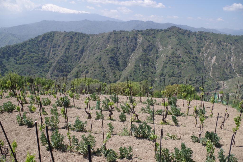 taormina terrazzamenti per vigne