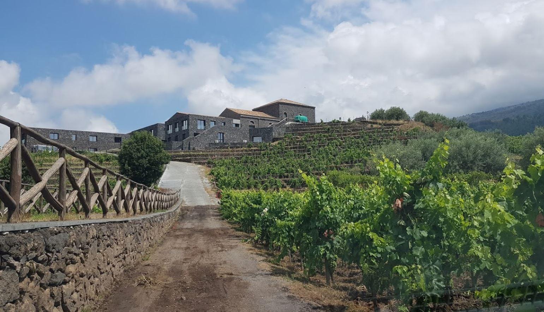 costanzo vini etna doc